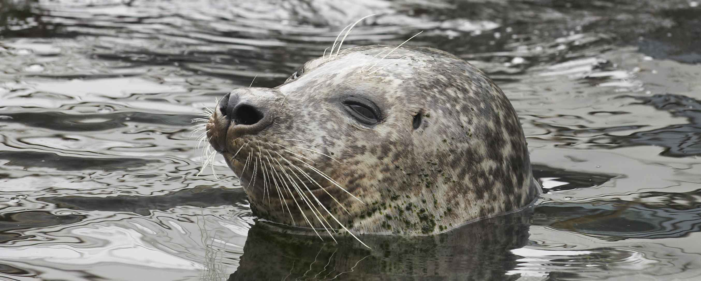 À la rencontre des phoques aux Etocs