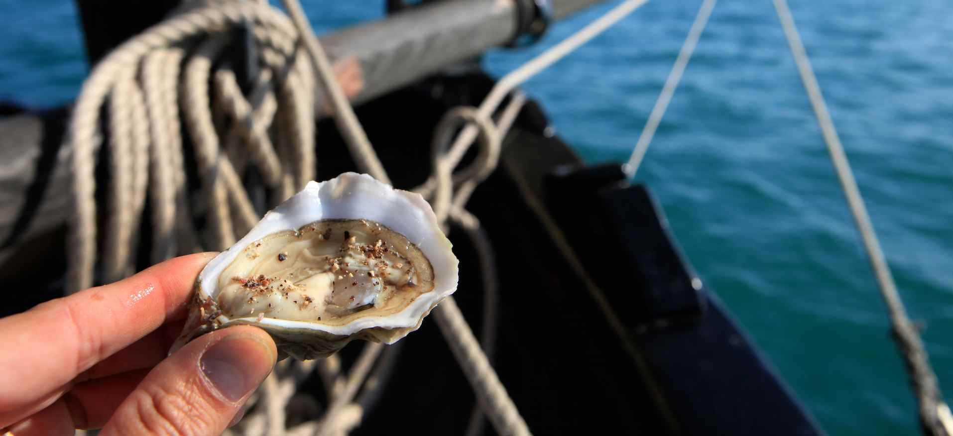 L'huître et l'ormeau