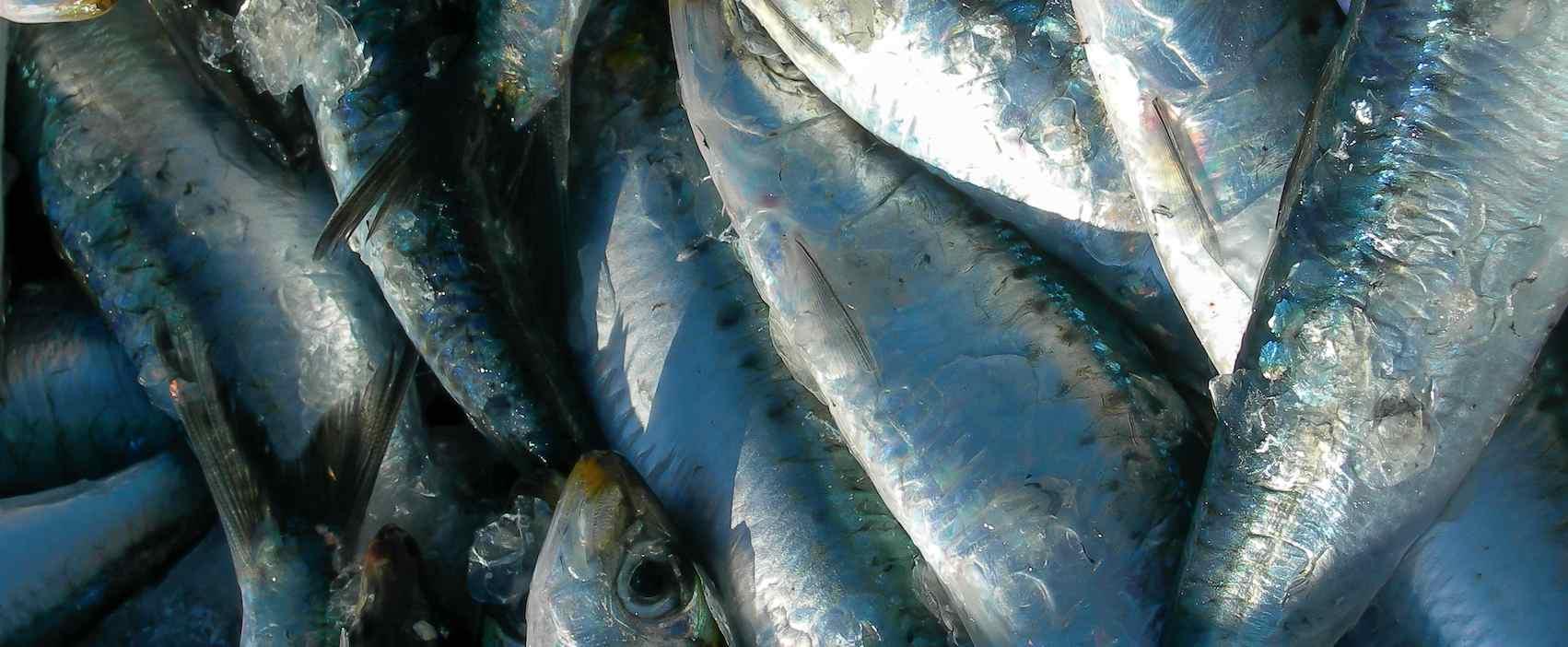 Bar et sardine