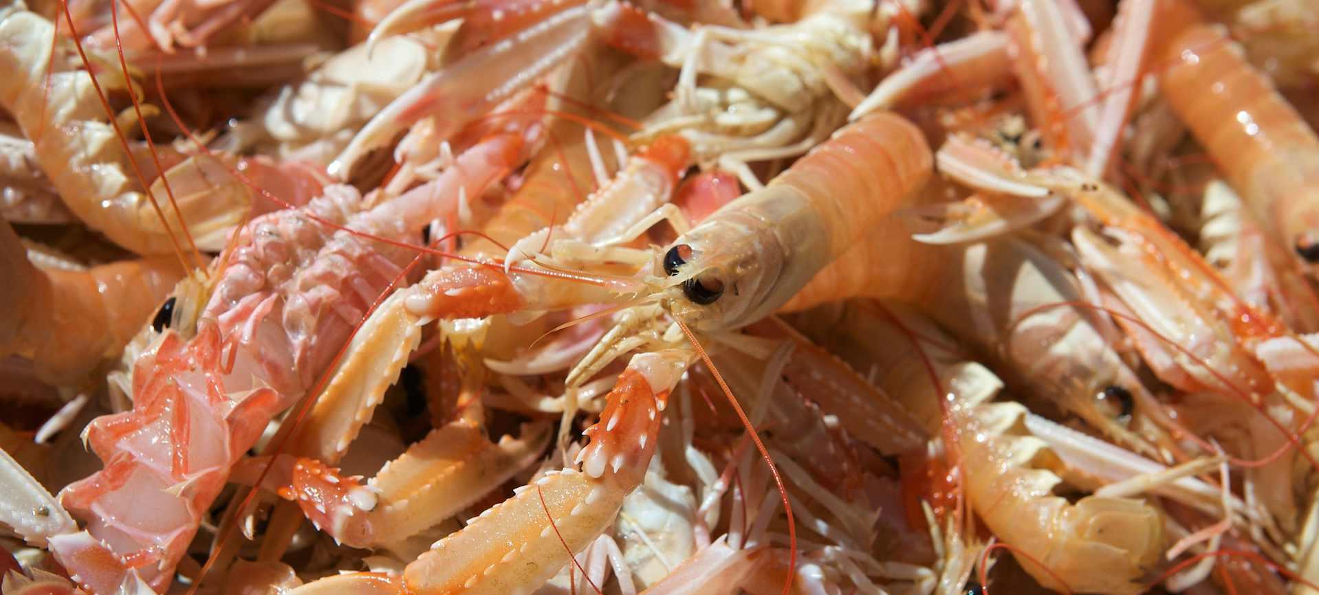Cuisson des crustacés et coquillages