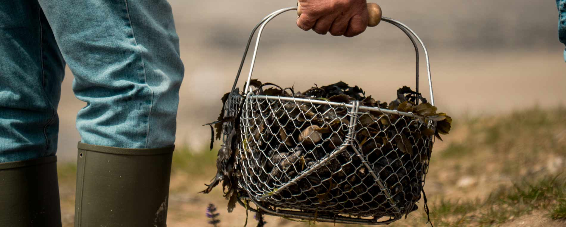 Les spots de pêche à pied à Carantec