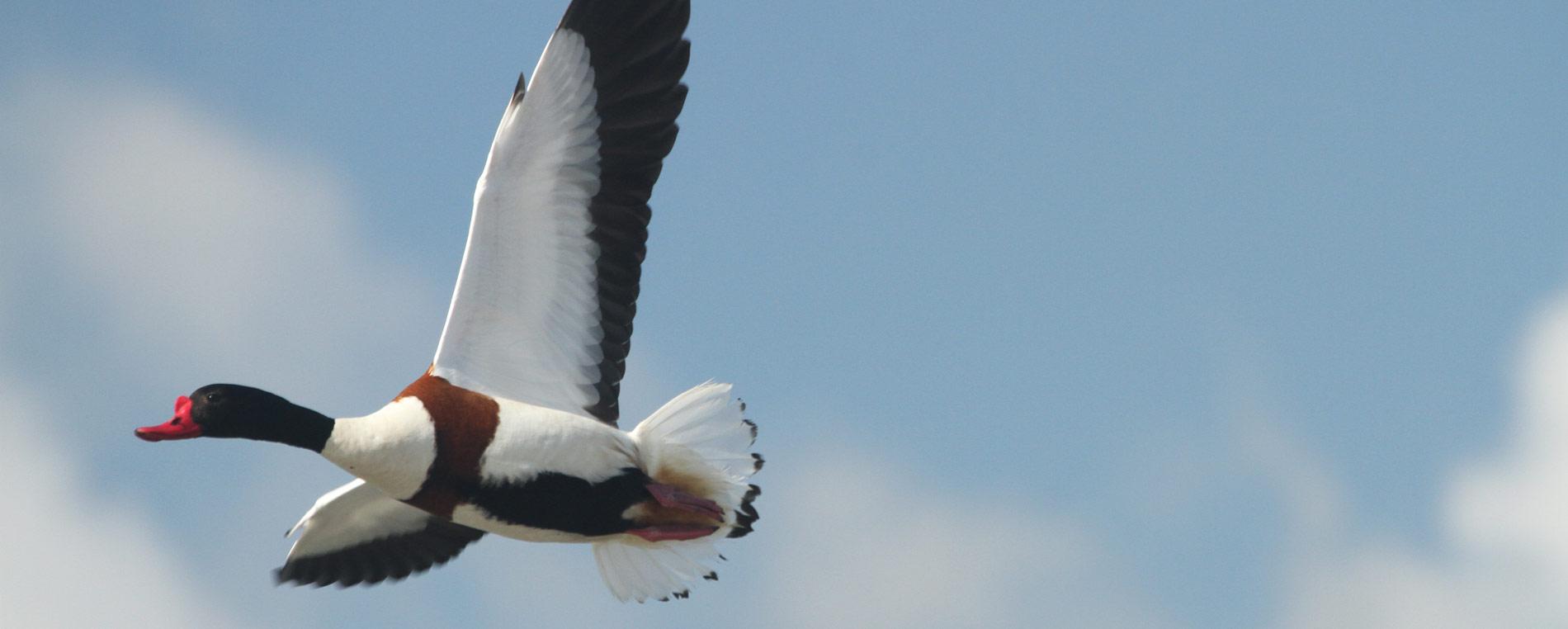 La réserve ornithologique des îlots de la Baie de Morlaix