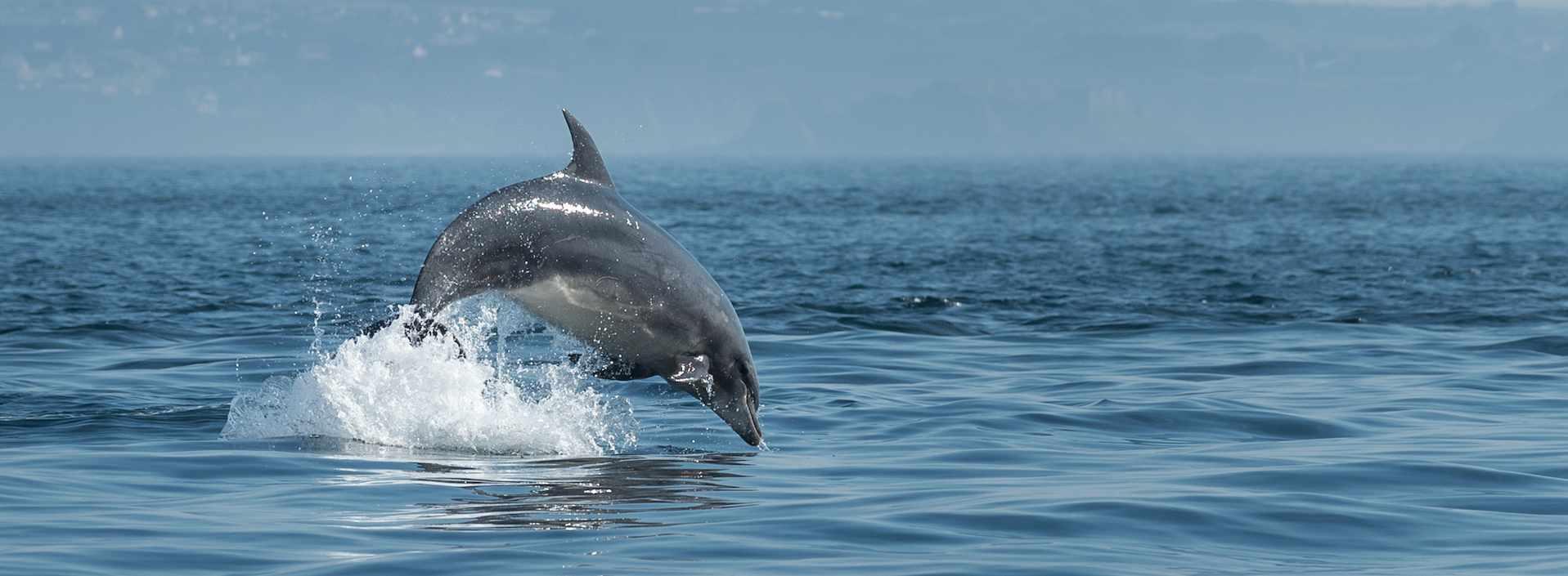 À la rencontre des dauphins du Finistère