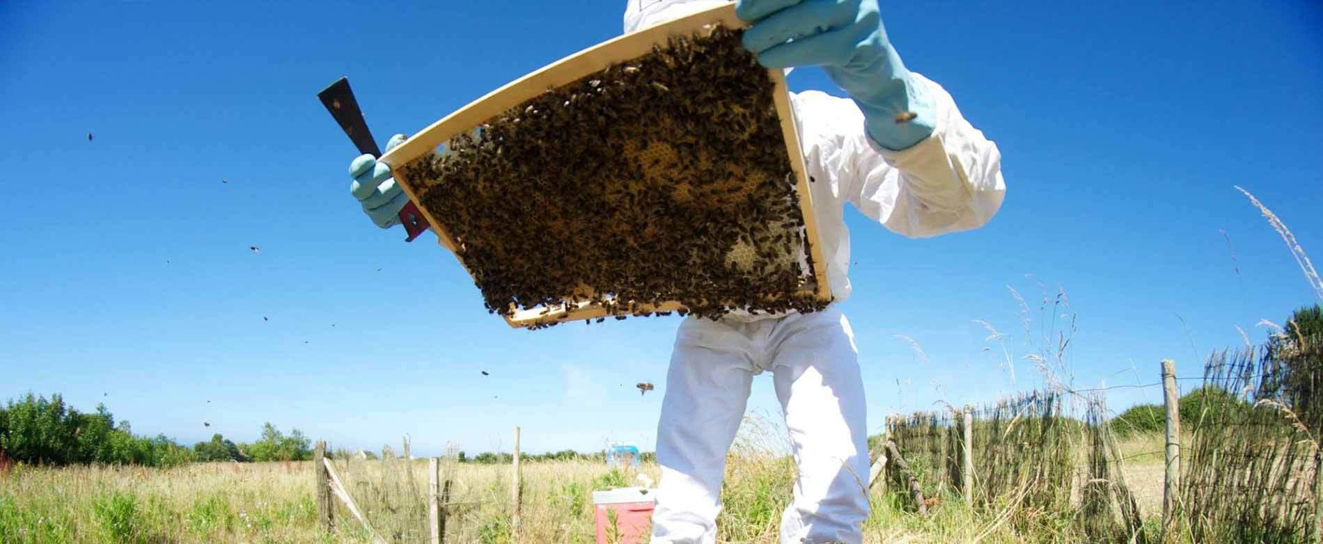 Entretien avec Véronique Yven, apicultrice