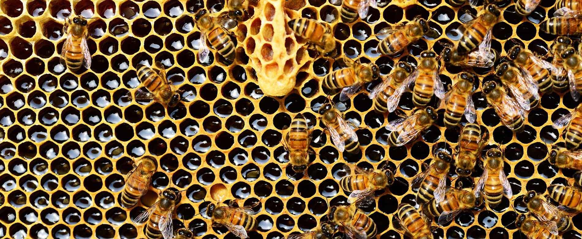 Les bienfaits du miel et autres produits de la ruche