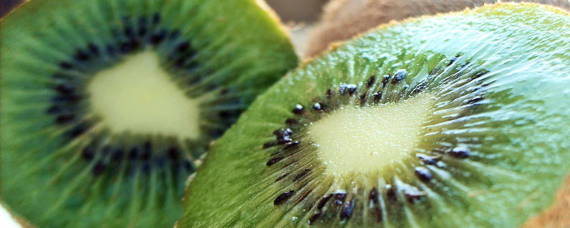 Des kiwis aux qualités gustatives inégalables à Fouesnant