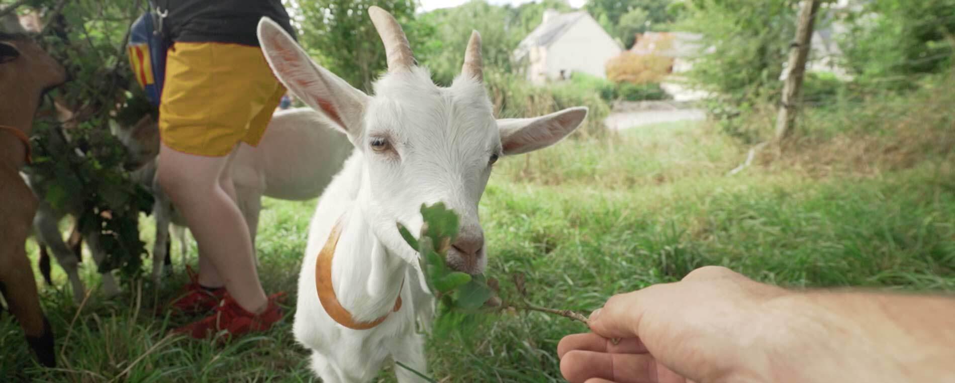 On a testé : la visite de la ferme de Joséphine à Sizun
