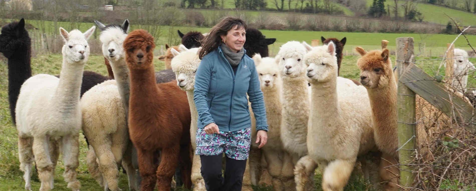 Virginie Kervarec, Les Alpagas du Rompay